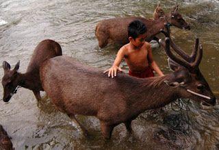 Gojekan: Qurban Kerbau, Kuda, Kijang dan hewan hadiah boleh...