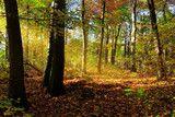 Photo: Wald im Herbst mit goldenen Sonnenstrahlen