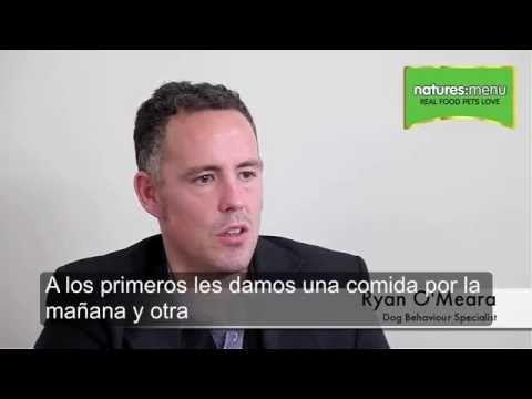 Ryan O'Meara nos explica como benefician las dietas crudas al comportamiento de nuestros perros  www.puromenu.es