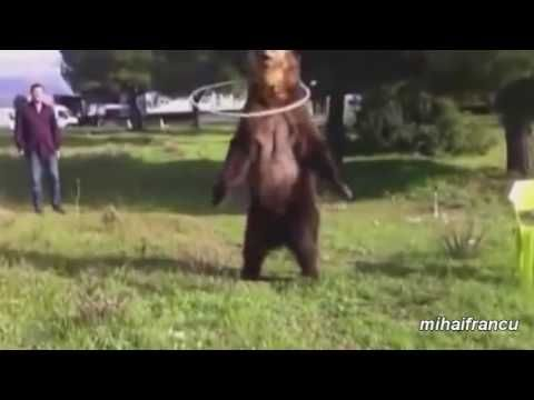 video lucu binatang: funny animals working out