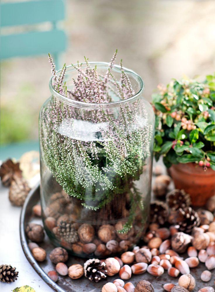 Auch im Glas macht sich die herbstliche Besenheide gut! #pflanzenfreude