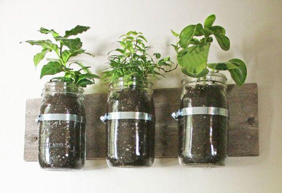 Best Of : Des plantes en bocal