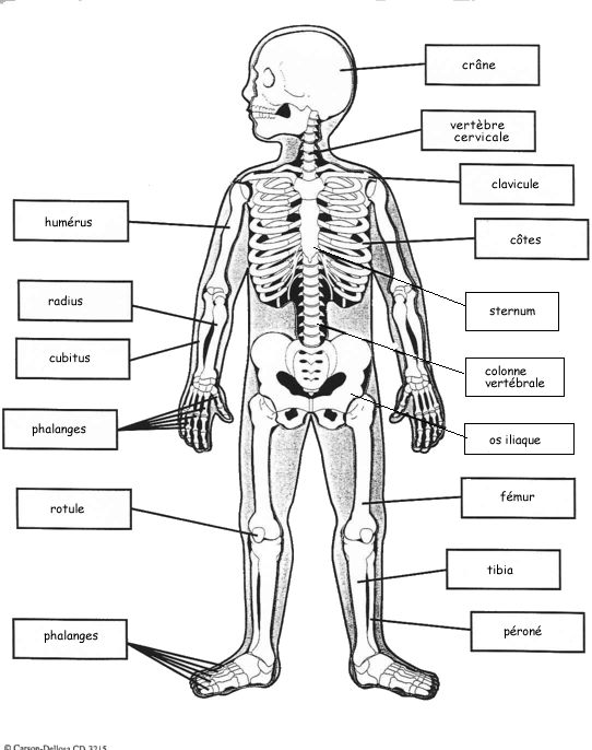 squelette, avec mention A remplacer/changer sur toutes les articulations douloureuses (spondylarthrite)
