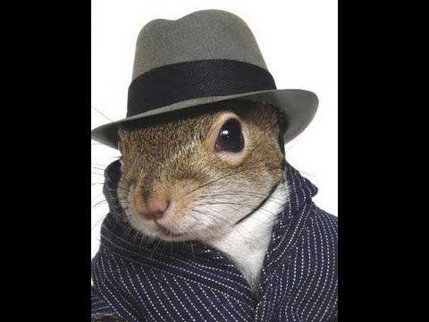 Squirrel removal nj, squirrel control nj , animal removal nj, animal control nj -- https://www.youtube.com/watch?v=NF8ryWDiAcU