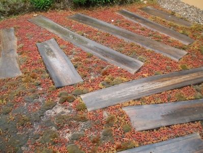 Ostatní střešní zahrada