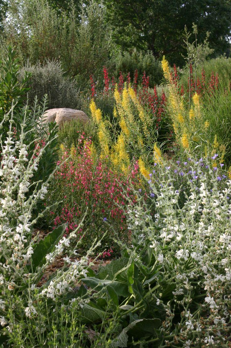 59 best Low-water Landscaping images on Pinterest | Garden park ...