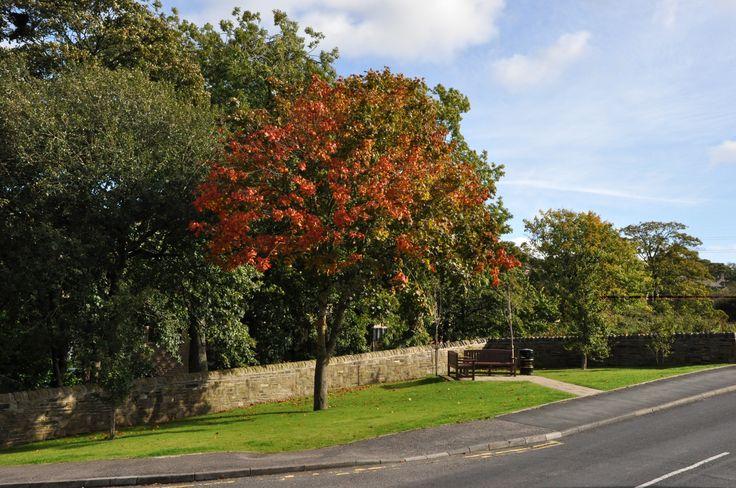 Autumn foliage in Wilsden: Oct/Nov 2013 cover. By Tony Caunt LRPS