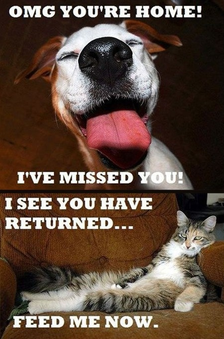 Glad I have dogs...: Dogs Cat, Cat Dogs Rules, Cats And Dogs