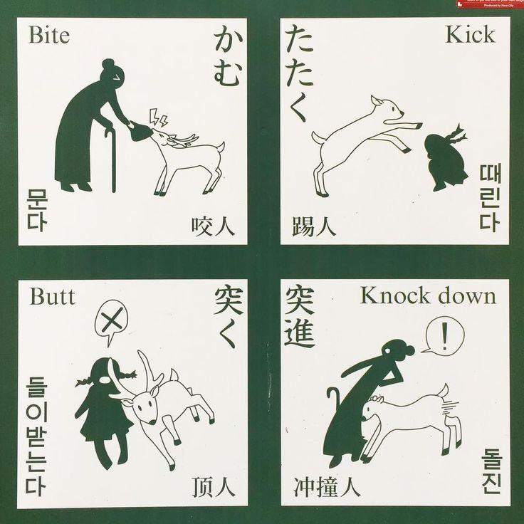 #Олени #опасныеживотные #Нара #предупреждение #туристам #Япония #берегисьоленя #рога