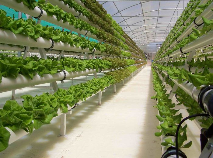 AGRITECTURE - More people are considering hydroponic greenhouse...