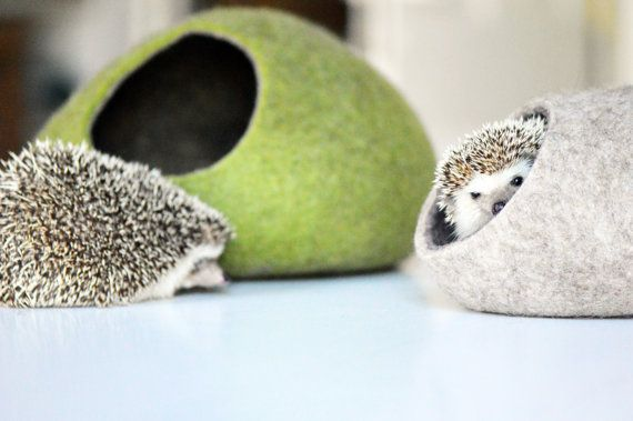 Hedgehog beds which are small animal caves