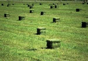 on hot summers days stacked alfalfa hay