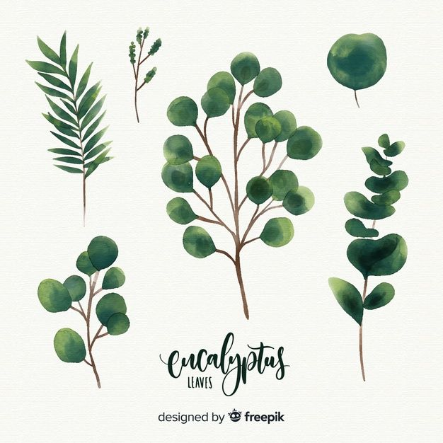Download Watercolor Eucalyptus Leaves For Free In 2020 Wreath