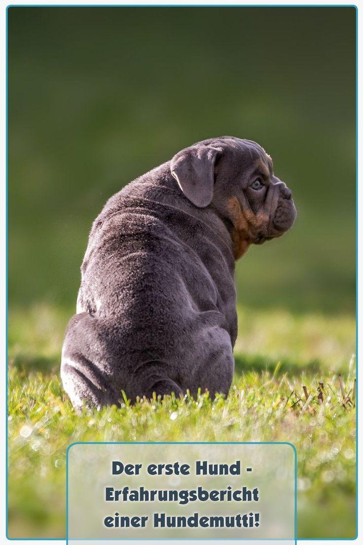 Pin Auf Tolle Hundeblog Artikel