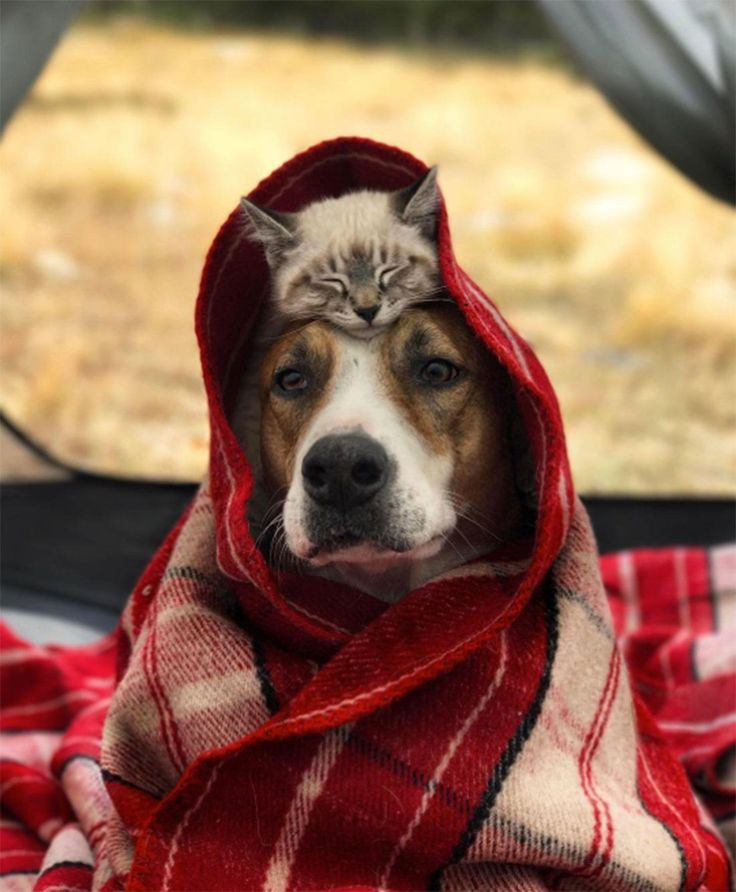 Pin By Virginia Butterfield On Rescue Of The Day Dogs Animal Rescue Site Animals