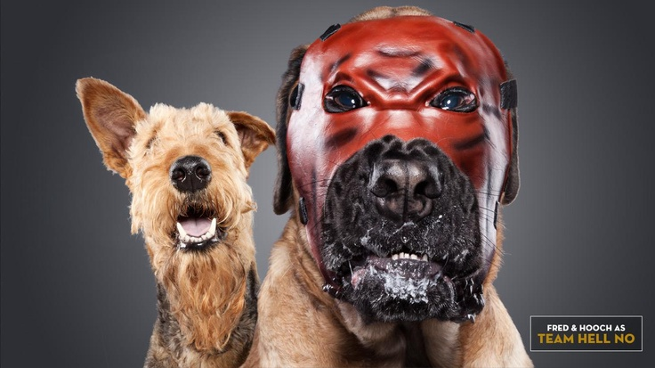 Fred and Hooch as Team Hell No: Where's Dr. Schnauzer when you need him!?  Check out more: http://wwe.me/lkyaE