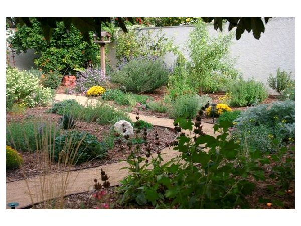 20 best images about california native plantss on for Landscaping with native plants