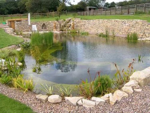 821 best images about pool designs on pinterest pools for Koi pond natural swimming pool
