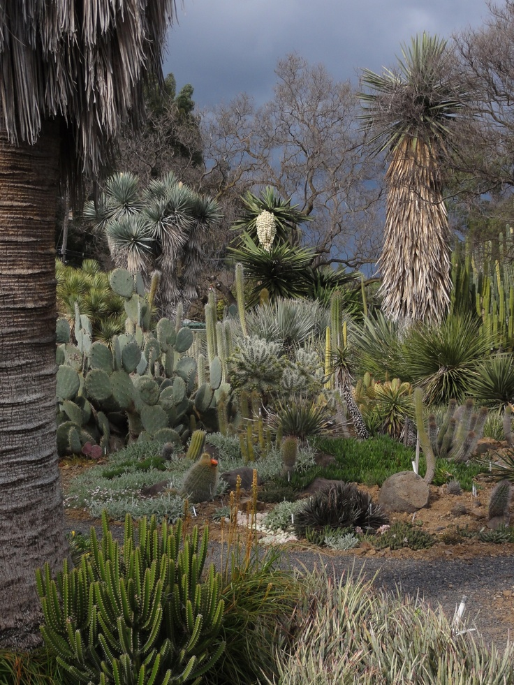 32 Best Images About Drought Tolerant Gardens On Pinterest