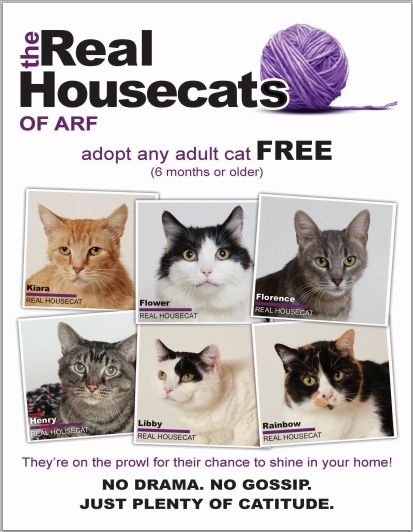Cat Adoption Events In Pa