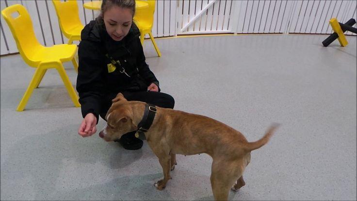 Dogs Trust Manchester - Tia