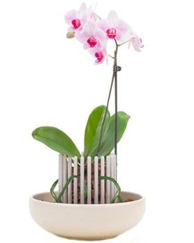Orchitop orchid pot!