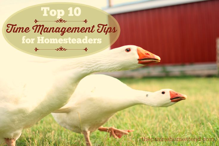 Time management tips from a mom, homesteader, blogger, and small business owner.