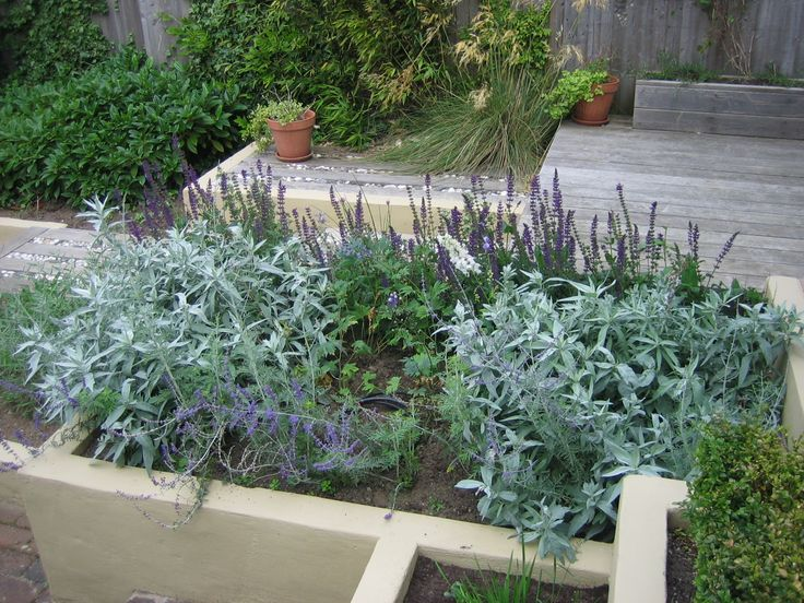 Nearest to the kitchen door we created a herb bed.  The Tarragon and Sage are clearly thriving