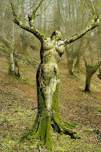 L'anima vegetale delle ninfe dei boschi