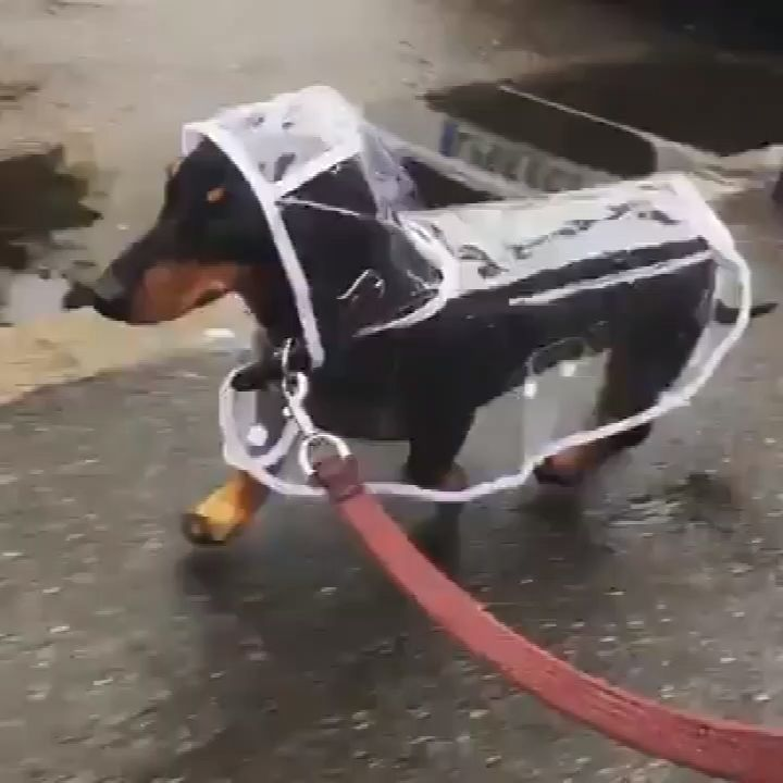 1pc Waterproof Dog Raincoat with Hood Transparent – Animals