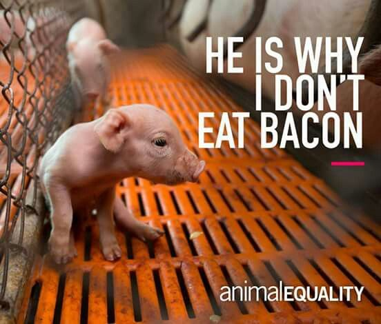 They're innocent living beings and they don't deserve to die for your tastebuds