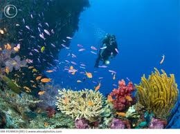 There are many professional Dive Schools with equipment in Sal and Boa Vista #TeamFunana #TeamCapeVerdean #CapeVerde