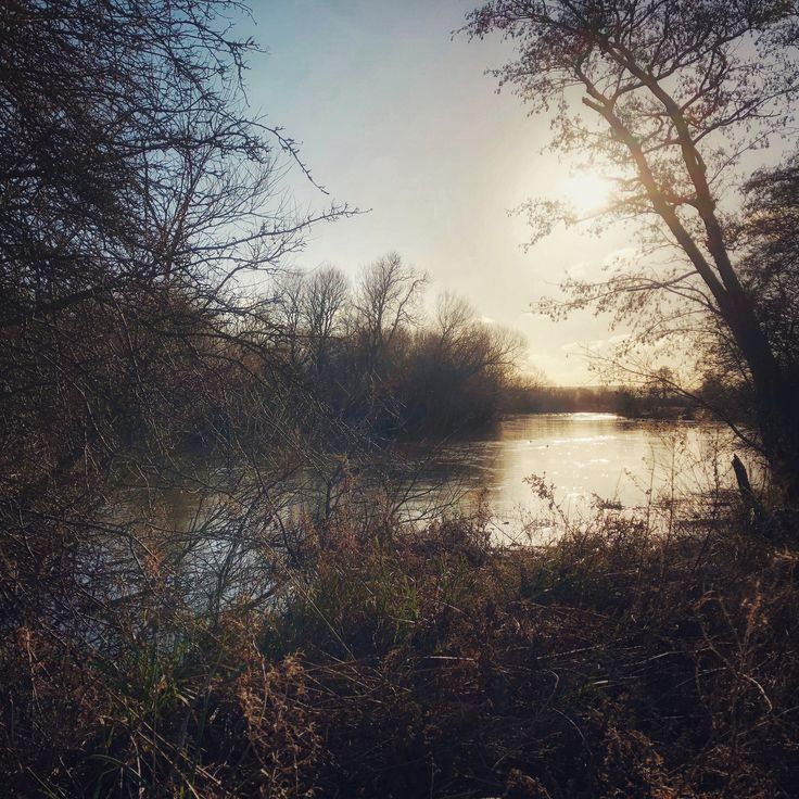Winter sun, shining down the River Thames.