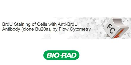 For use with flow cytometry tested Mouse Anti-BrdU Antibody, clone Bu20a (MCA2483).
