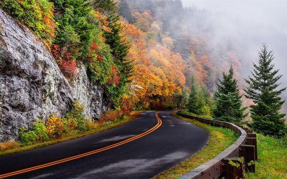 Észak-Karolina, ősz, út, fák, köd