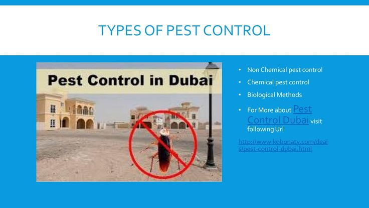 There are huge number of pest control services available in Dubai. Choosing most effective and low cost pest control is something of challenge. Kobonaty offers pest control Dubai deals from experts. Rid your home or commercial places of pests with certified pest controllers Dubai. Take the advantage of these deals and make it your surrounding pest free zone. Limited number of coupons!! Be first to book your discount voucher.  - http://www.kobonaty.com/deals/pest-control-dubai.html