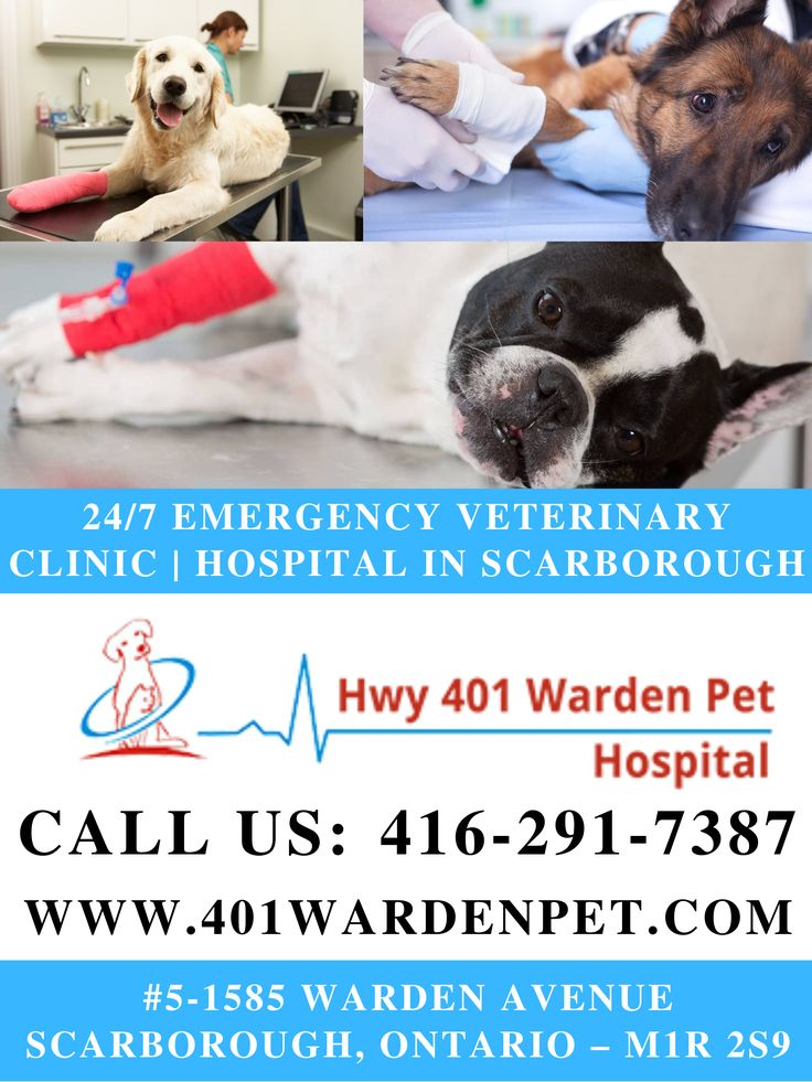 Looking for 24/7 Emergency Veterinary Clinic Hospital in