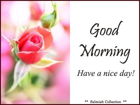 Flowers of Life: Good Morning Wish 16