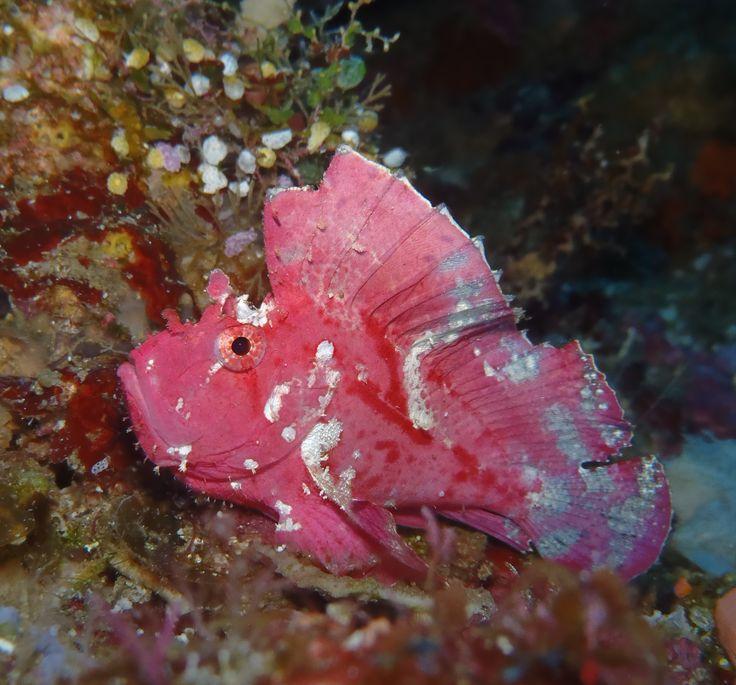 Bunaken National Marine Park - Grand Luley Resort Manado