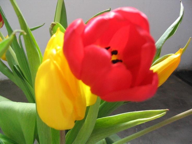stelian ilie flower 5