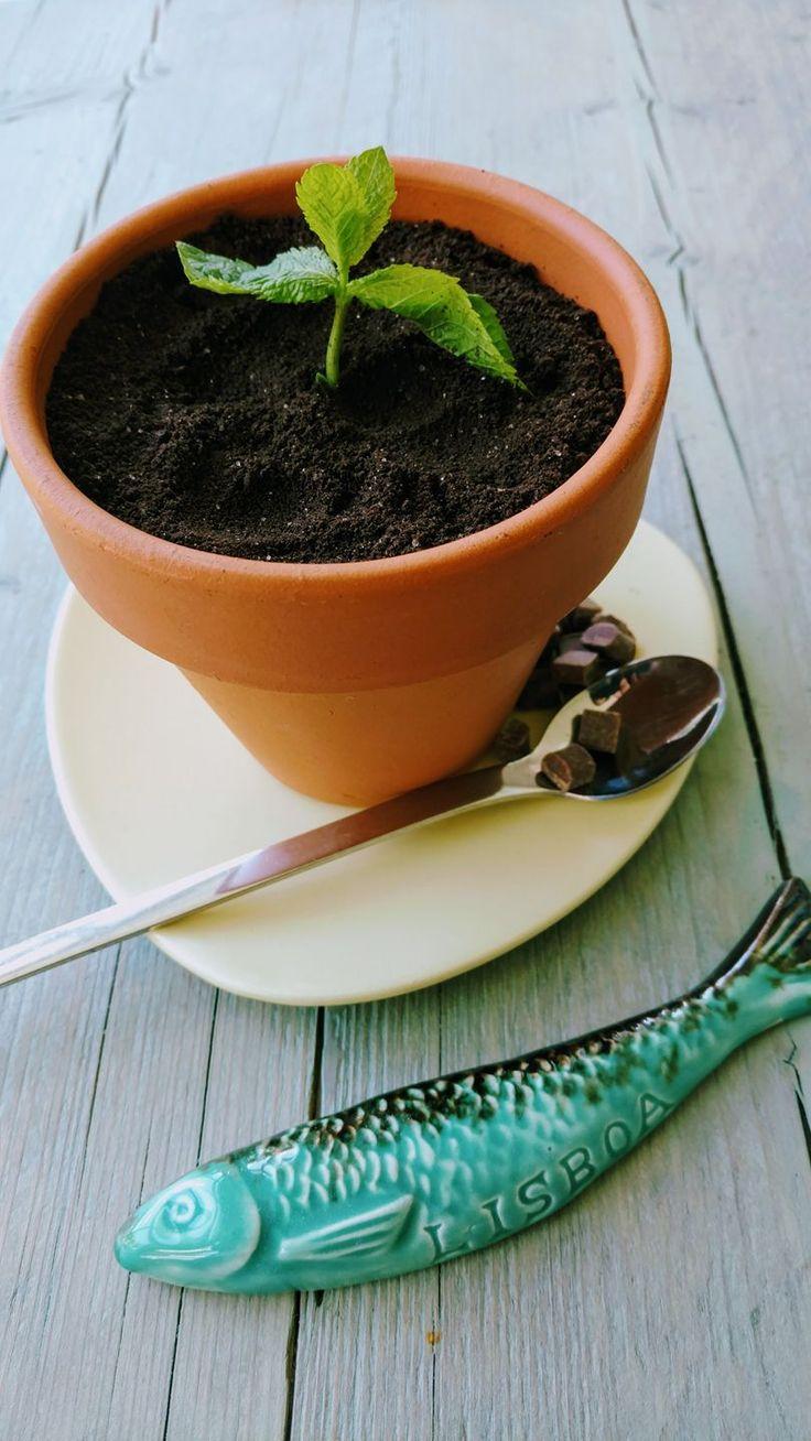 Cheesecake karamel met Oreo Koekjes.  Je gasten verassen met een origineel dessert/toetje?  Serveer een bloempotje met een bodem van karamel, met chocolade snippers. Cheesecake met een laagje rode vruchten. Bestrooien met fijngemaakte oreo koekjes. Takje basilicum, tijm, munt net wat je in huis hebt. Succes gegarandeerd! Idee opgedaan in Portugal.