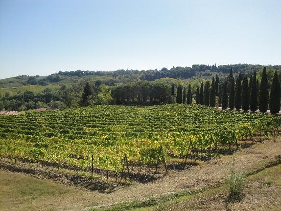 Sovestro in Poggio Winery, book a private visit for the best winery experience.  www.guardastelle.com