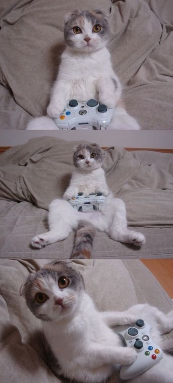 I love cats, especially gamer cats.