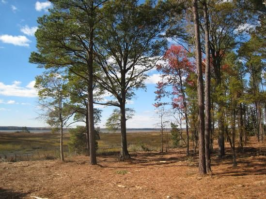 Anderson's Neck eventually fell into the hands of the Chesapeake Corporation in the 20th century and became a loblolly pine plantation for the nearby mill.  Over time it changed hands to John Hancock Insurance as part of their Timber Investment Management Operation.