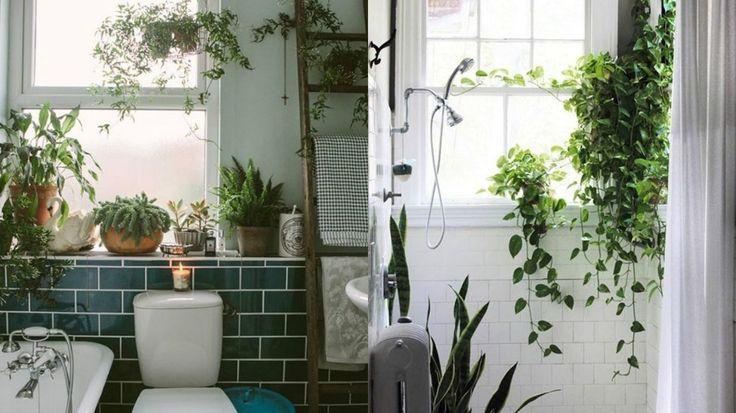 Coloro che amano le piante raramente riescono a rinunciare all'idea di decorare la propria abitazione proprio utilizzando le infinite varietà che Madre Natura ci mette a disposizione; che si …