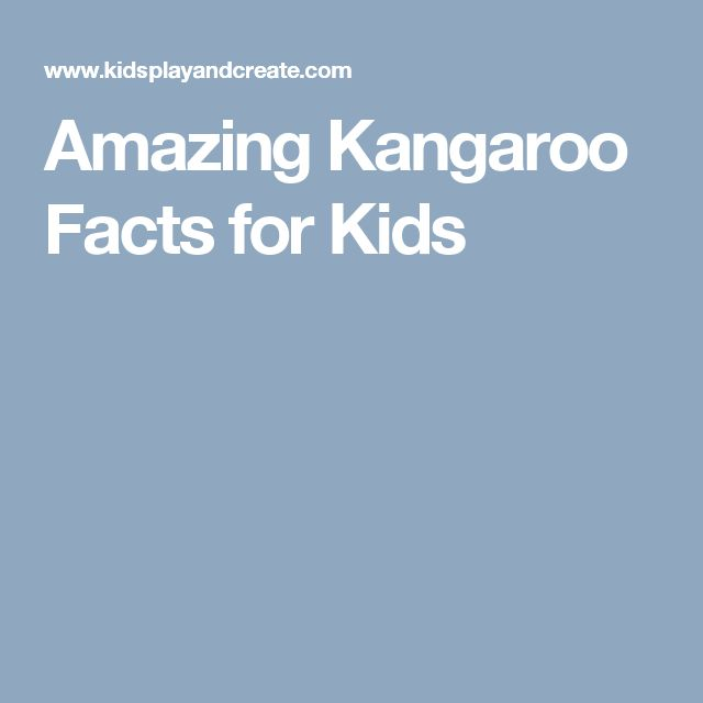 Amazing Kangaroo Facts for Kids