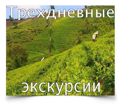 academy-skrygal.com — Шри Ланка — трансформационные туры и экскурсии для самостоятельных путешествий с Украины!