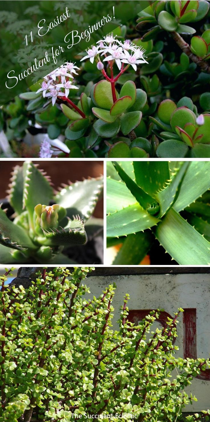 how to repot succulents together