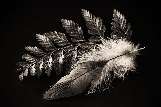 Fern and Feather   © Elyse Childs Photography