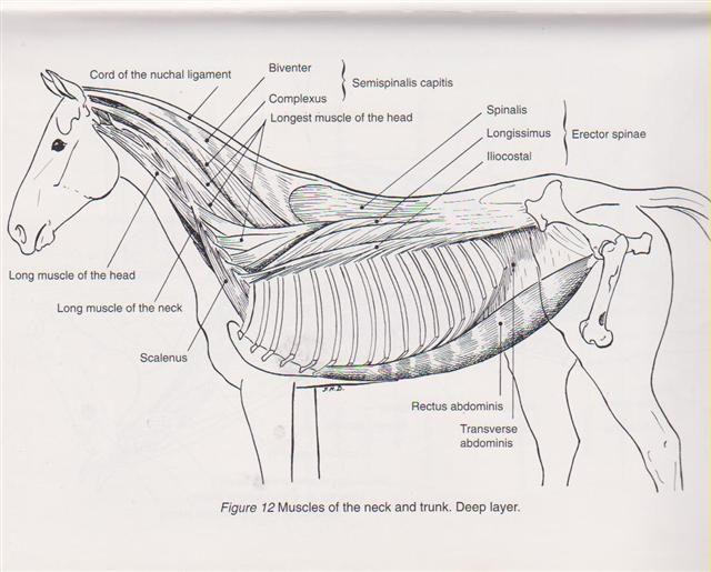 378 best horses   images on pinterest